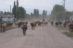 Ankunft-in-Kirgisistan-19