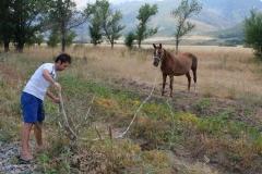 Cowboy-in-Kasachstan-17