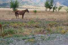 Cowboy-in-Kasachstan-18