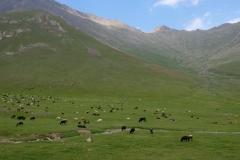 Durch-das-wilde-Kirgistan-24