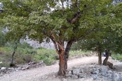 Ein-Tag-im-Dorf-Arslanbob-25