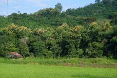 Das-goldene-Dreieck_Laos-22