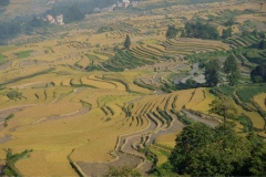 Hani-Yunnan-1