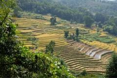 Hani-Yunnan-2
