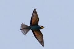 Morgens am Jandari See: Unbekannter Vogel