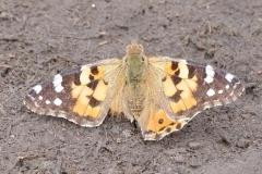 Morgens am Jandari See: Schmetterlinge