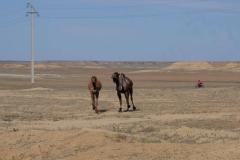 Bilder aus der Kasachischen Steppe
