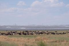 Solaranlage-beim-Mausoleum-von-Aisha-Bibi-2