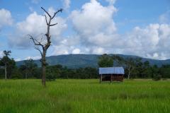 Mekong-Dschungel-und-Wasserfaelle-12