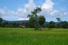 Mekong-Dschungel-und-Wasserfaelle-13
