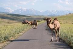 Naturreservat Aksu-Jabagly-5