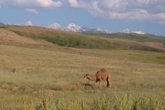 Naturreservat Aksu-Jabagly-11