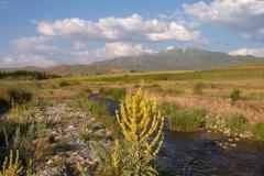 Naturreservat Aksu-Jabagly-20
