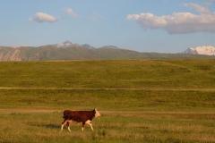 Naturreservat Aksu-Jabagly-21