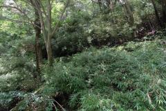 Naturschutzgebiet-Tangjiahe-23