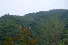 Naturschutzgebiet-Tangjiahe-26