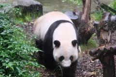 Chengdu-15