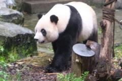 Chengdu-16