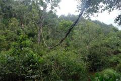 Regenwald-11