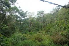 Regenwald-13