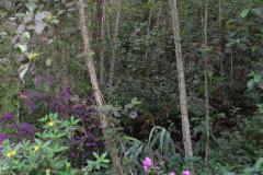 Regenwald-2