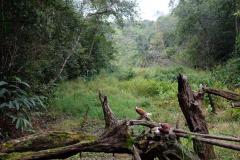 Regenwald-21