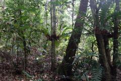 Regenwald-31