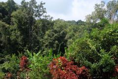 Regenwald-41