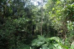 Regenwald-8