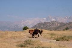 Rückfahrt-ins-kirgisische-Bishkek-4