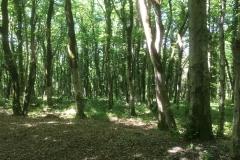 Sataplia Naturreservat
