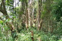 Tad-Fane-Wasserfaelle-in-Laos-12