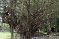 Angkor-Wat-4