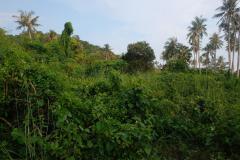 Trauminsel-in-Kambodscha-13