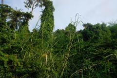 Trauminsel-in-Kambodscha-14