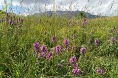 Wandern-im-Naturreservat-Aksu-Jabagly-15