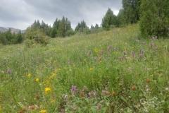 Wandern-im-Naturreservat-Aksu-Jabagly-5