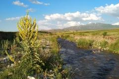 Wandern-im-Naturreservat-Aksu-Jabagly-8