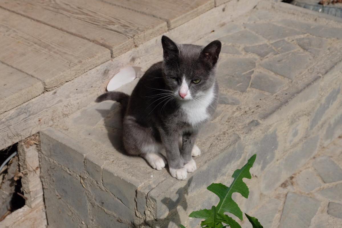 Katze bei Tokhliauri