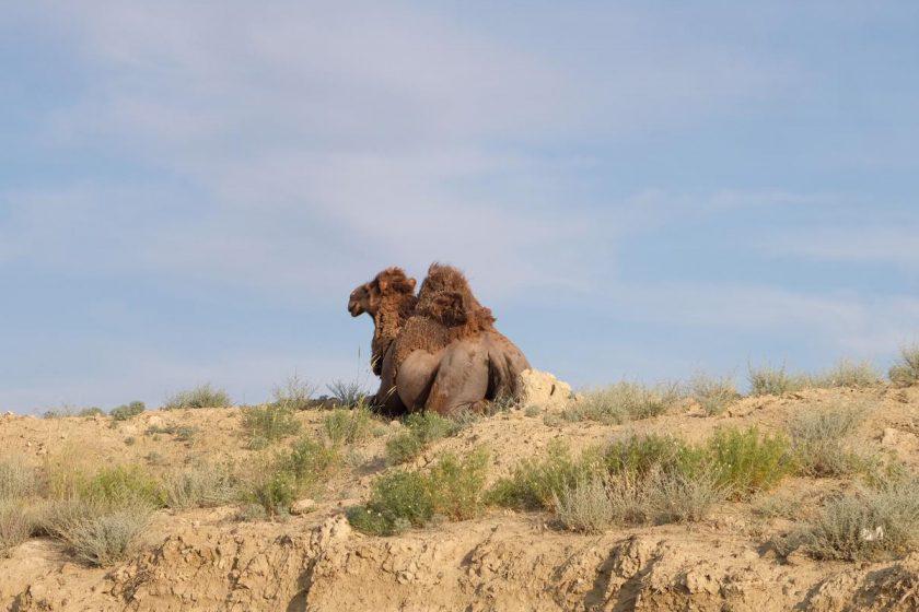 Kasachische Steppe hinter Aktau