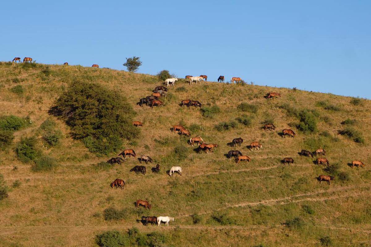 Pferde im Aksu-Canyon Kasachstan