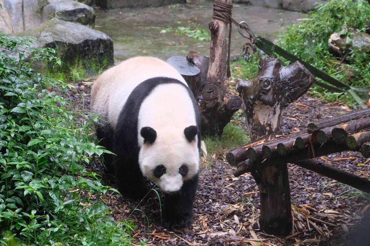 Chengdu Panda Centrum